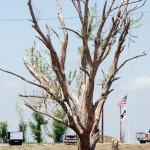 Rekordmange omkomne i år i Tornado Alley